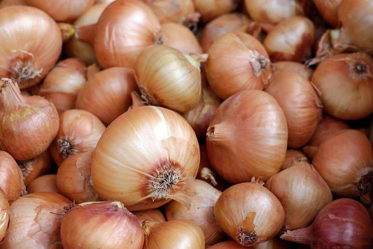 onion juice alopecia areata