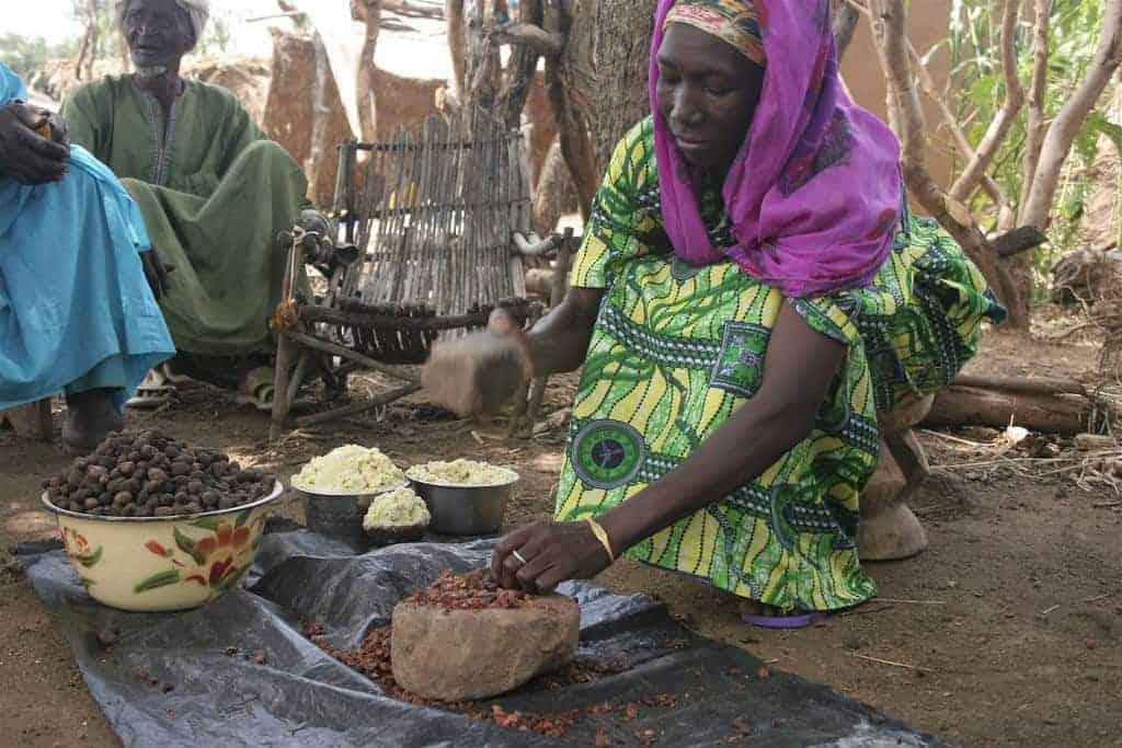 Shea nut processing in Burkina Faso