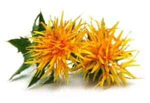 yellow & red safflower plant
