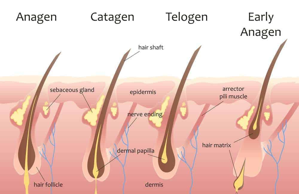 How To Grow Natural Hair The Advanced Guide To Hair Growth
