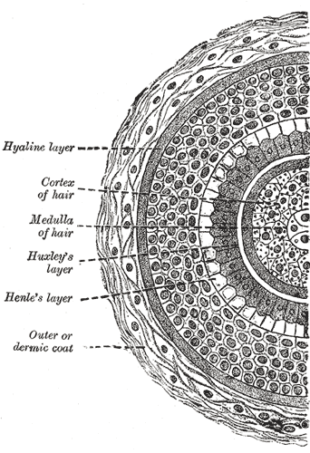 Hair porosity the insiders guide to understanding porous hair hair structure urmus Choice Image
